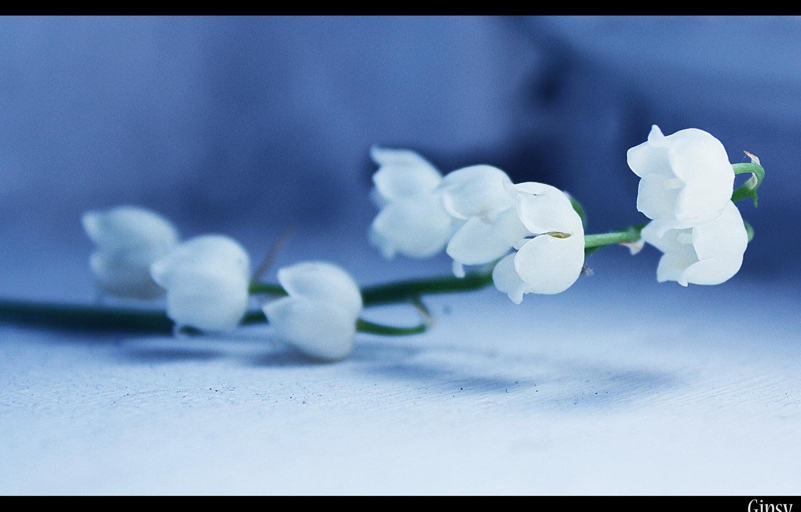 3058 скачать обои Растения, Цветы, Колокольчики - заставки и картинки бесплатно