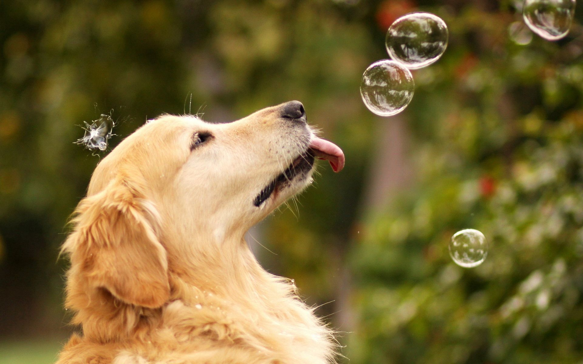 141346 download wallpaper Animals, Dog, Summer, Bubbles screensavers and pictures for free