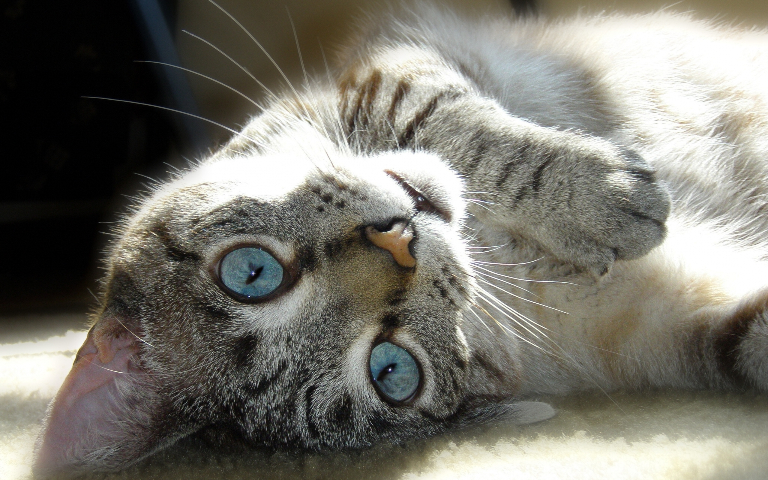 49712 download wallpaper Animals, Cats screensavers and pictures for free