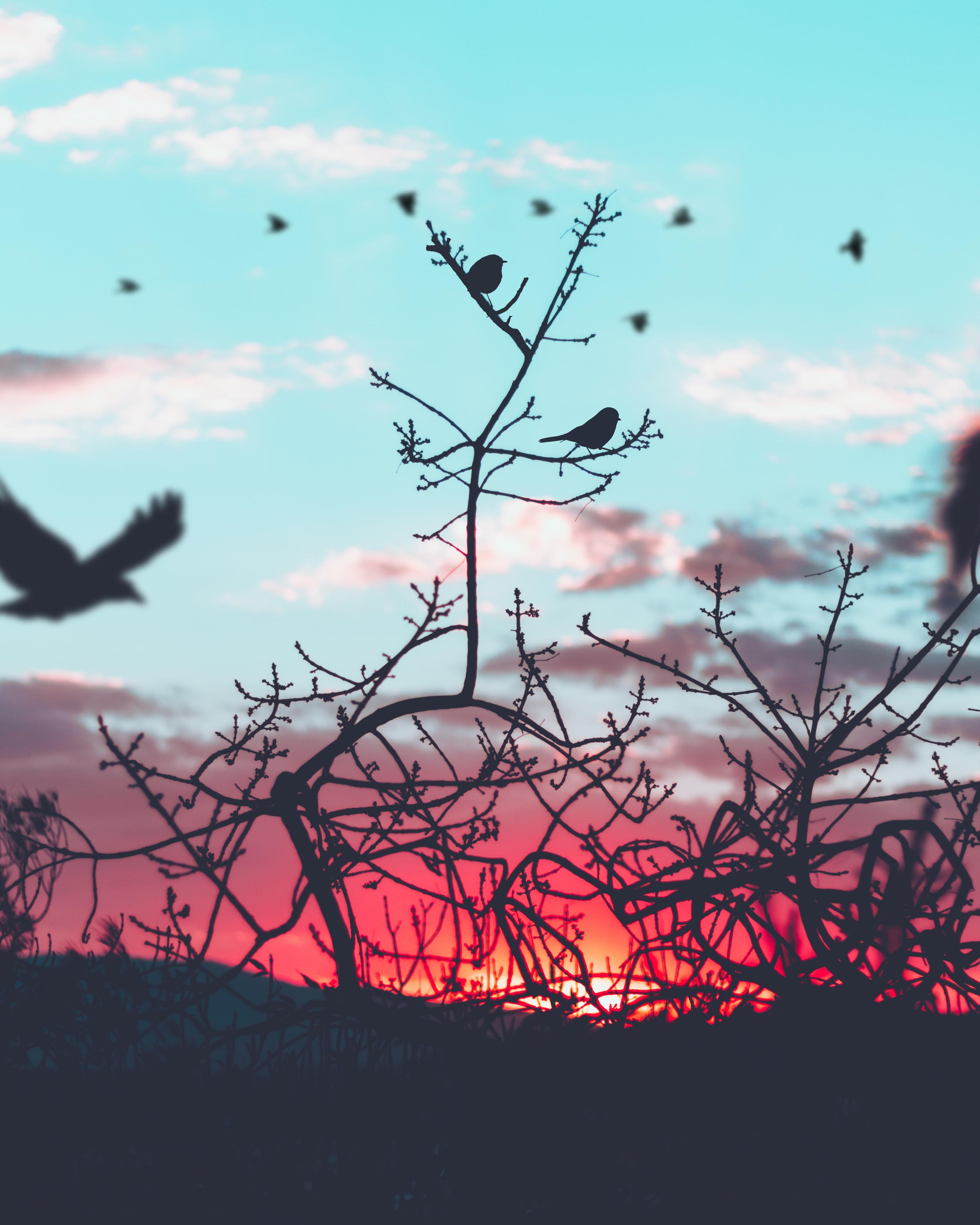66993 скачать обои Ветки, Природа, Птицы, Небо, Силуэт - заставки и картинки бесплатно