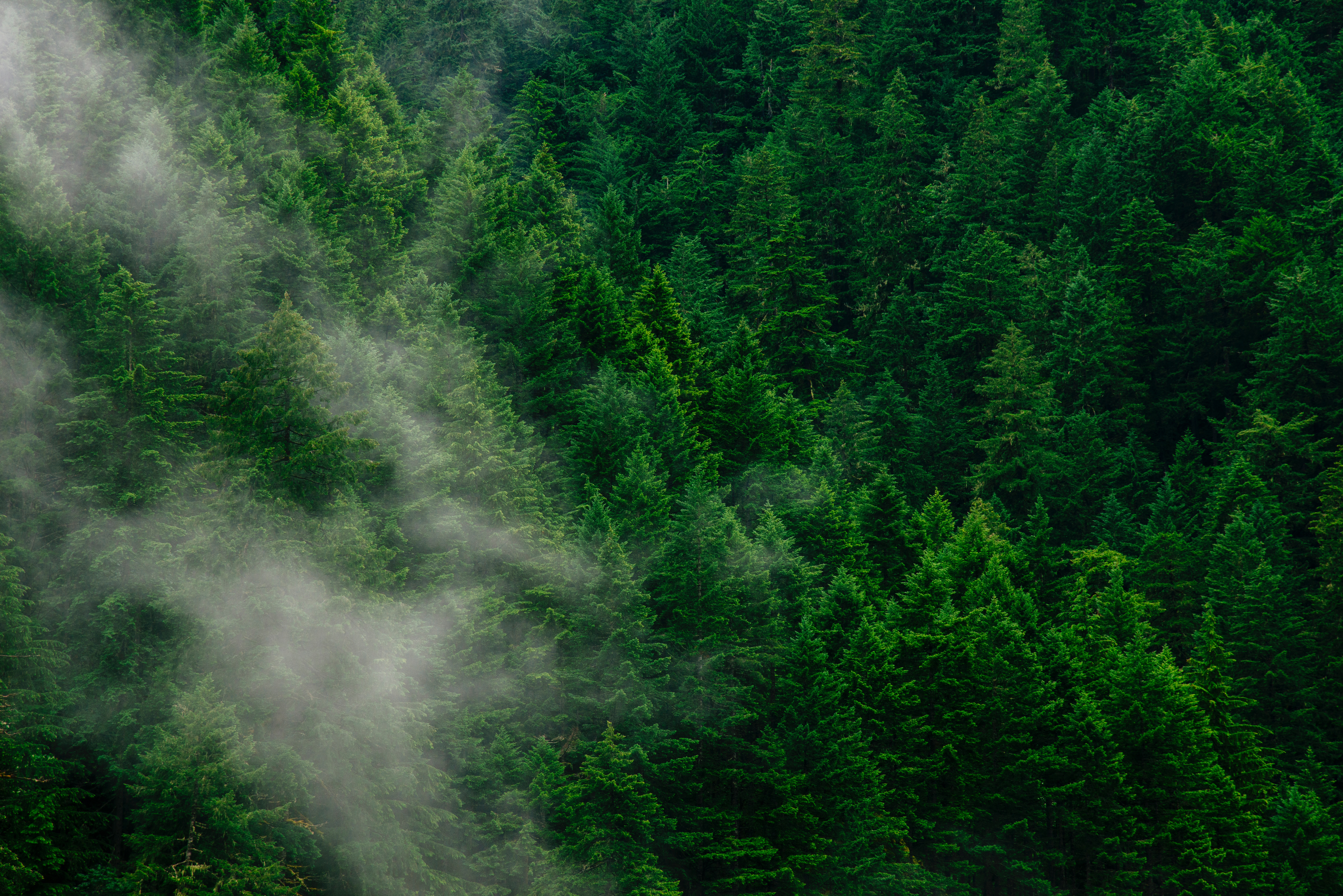 142487 download wallpaper Forest, Nature, Trees, View From Above, Fog screensavers and pictures for free