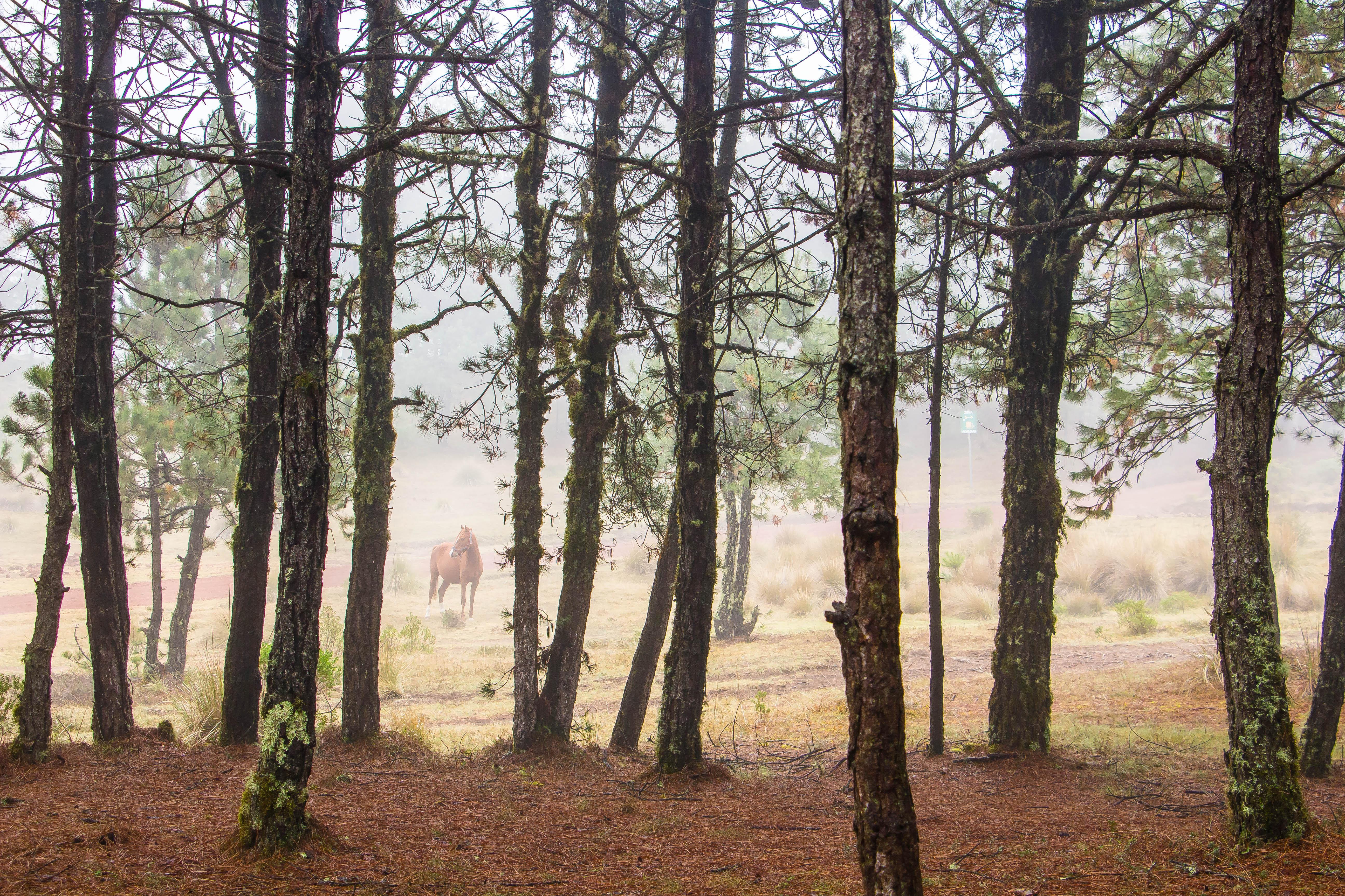 77490 скачать обои Животные, Лошадь, Лес, Деревья, Животное - заставки и картинки бесплатно
