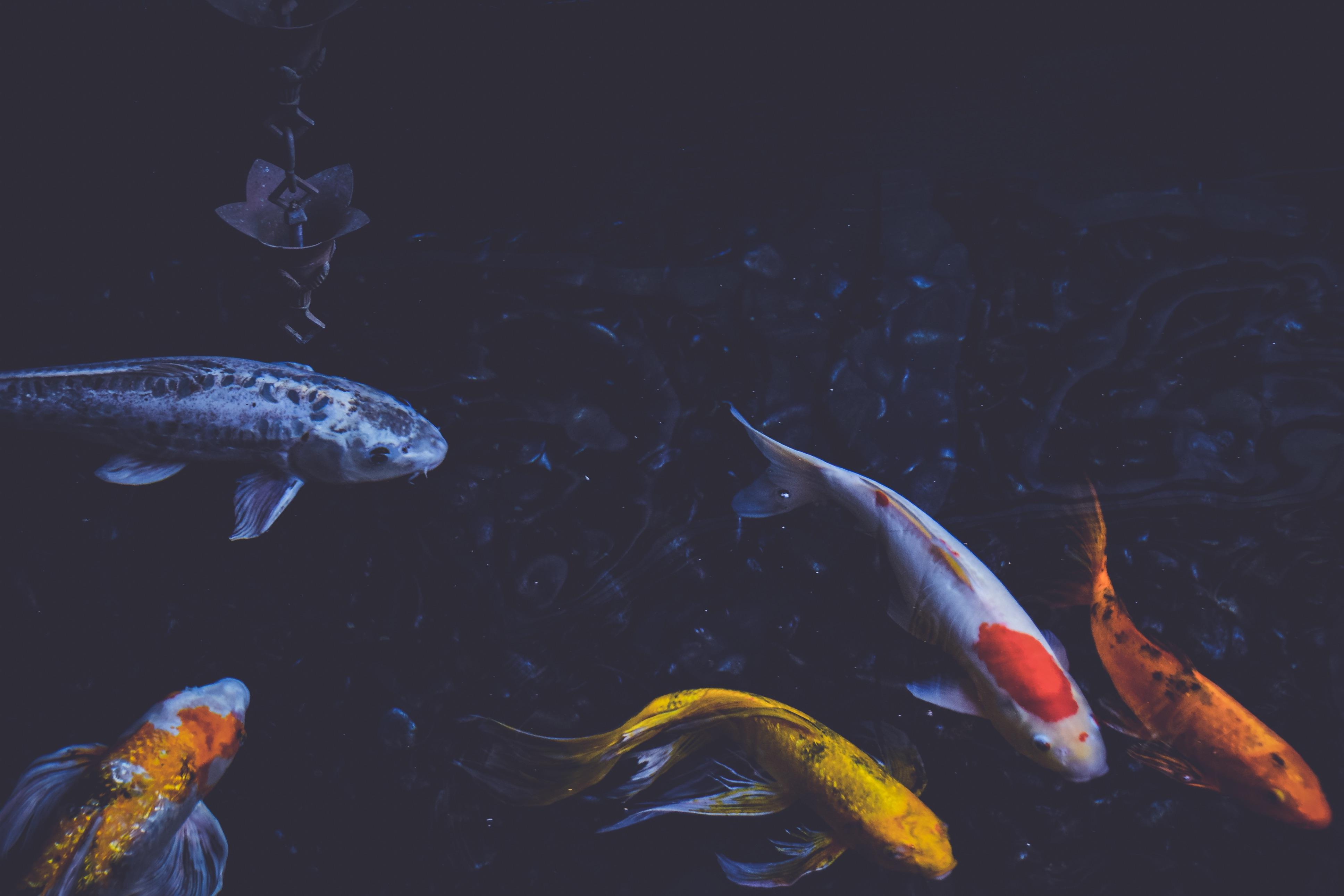 69790 Заставки и Обои Рыбы на телефон. Скачать Рыбы, Природа, Подводный Мир, Плавать картинки бесплатно