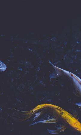 69790壁紙のダウンロード自然, 水中の世界, 水中ワールド, 泳ぐには, 泳ぐ, 魚-スクリーンセーバーと写真を無料で