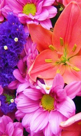 8411 скачать обои Растения, Цветы, Фон - заставки и картинки бесплатно