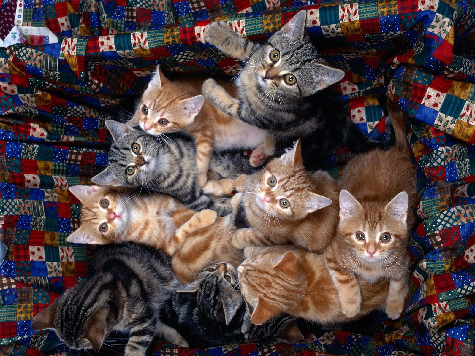 125852 Screensavers and Wallpapers Sit for phone. Download Animals, Sit, Lot, Kittens pictures for free