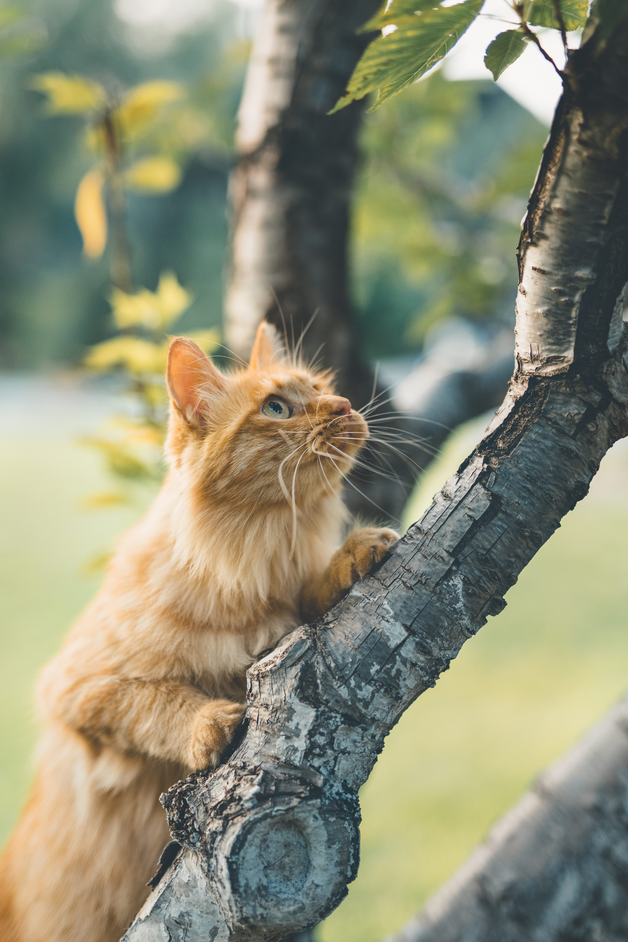 155921 download wallpaper Animals, Cat, Sight, Opinion, Fluffy, Wood, Tree screensavers and pictures for free