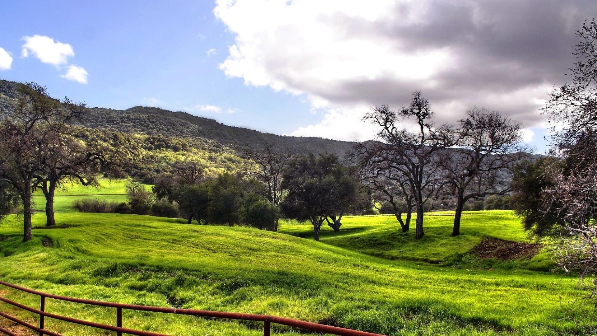 25763 скачать обои Пейзаж, Деревья, Трава - заставки и картинки бесплатно