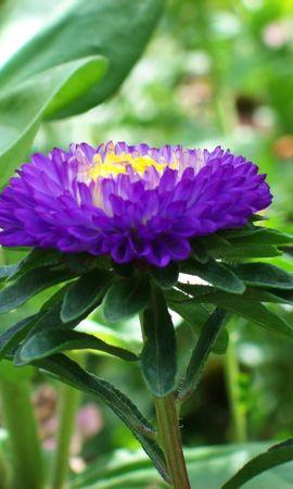 8400 скачать обои Растения, Цветы - заставки и картинки бесплатно