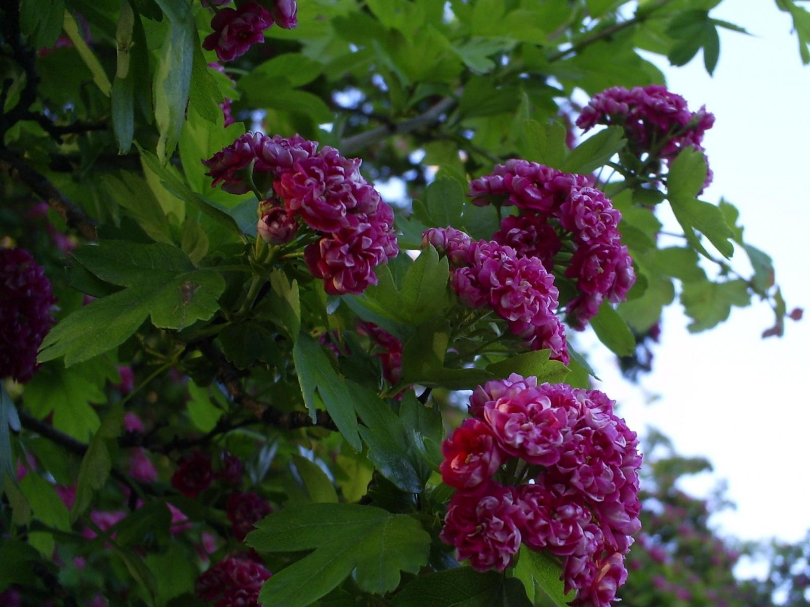 4858 скачать обои Растения, Цветы - заставки и картинки бесплатно