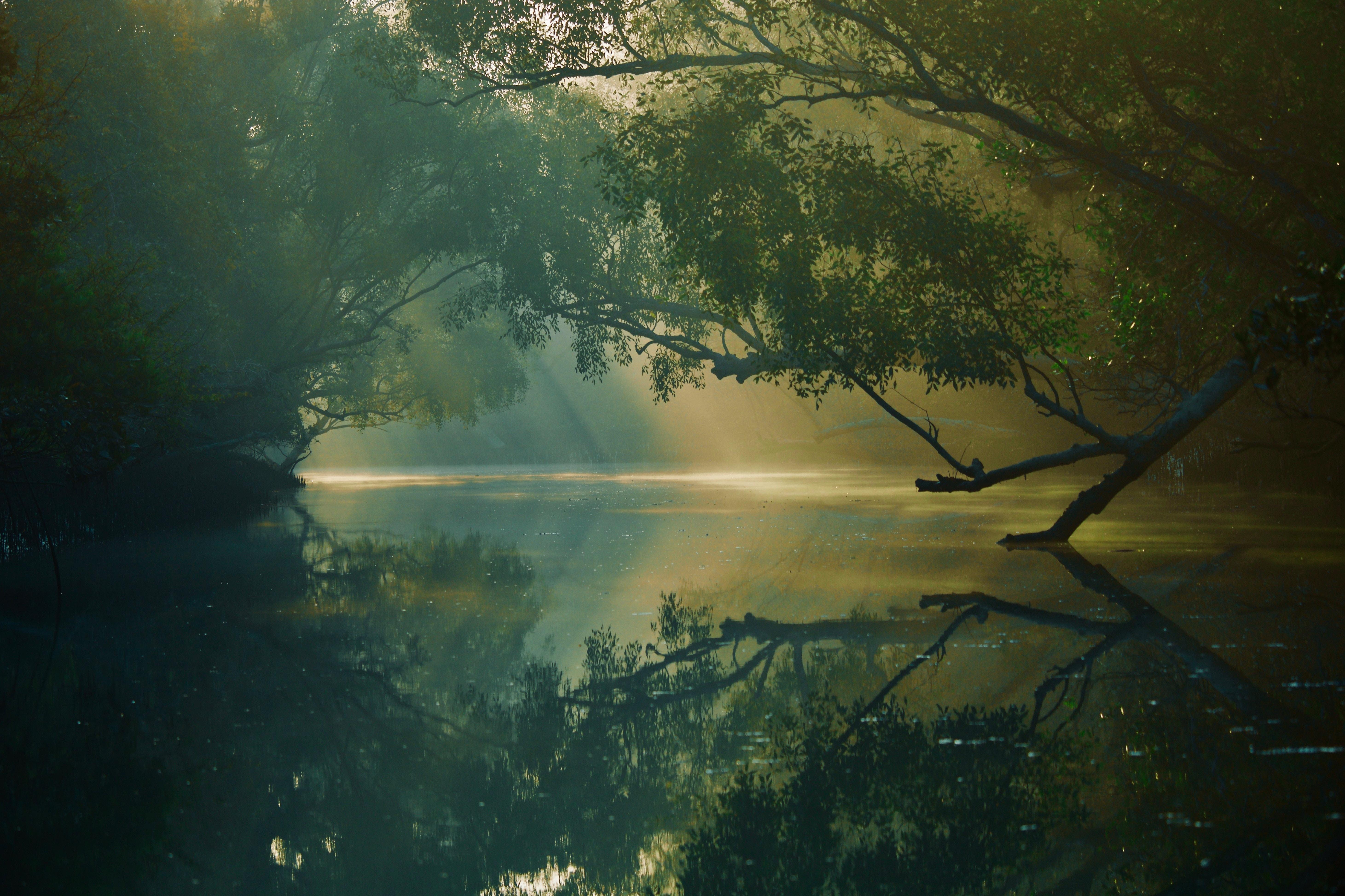124656 descargar fondo de pantalla Naturaleza, Árboles, Ríos, Reflexión, Bosque, Pantano, Sundarban, Sundarbans, Bangladesh: protectores de pantalla e imágenes gratis