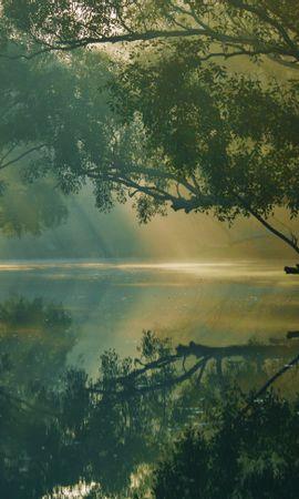 124656 Заставки и Обои Река на телефон. Скачать Природа, Деревья, Река, Отражение, Лес, Болото, Сундарбан, Бангладеш картинки бесплатно