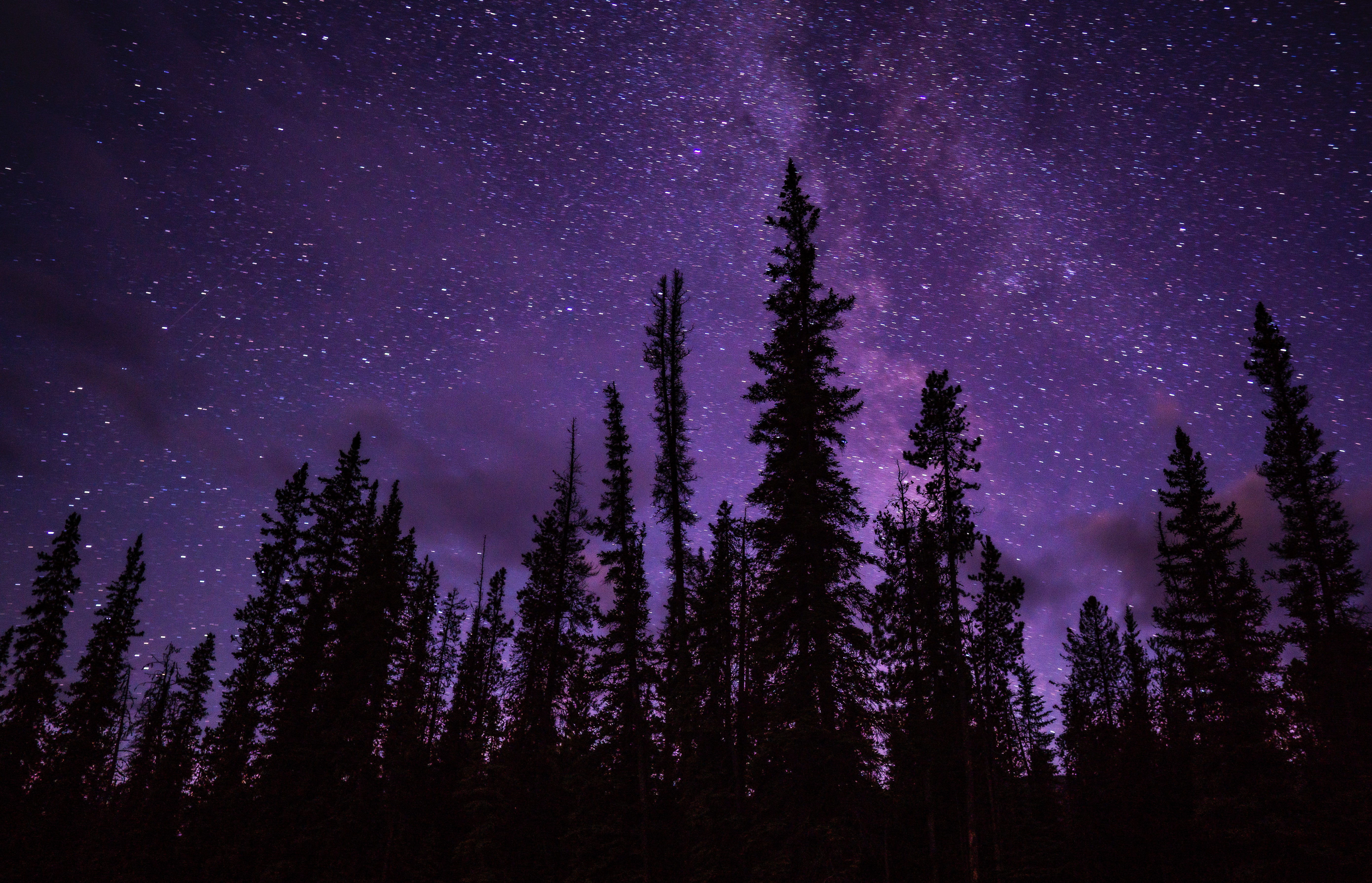 73013 Screensavers and Wallpapers Spruce for phone. Download Nature, Trees, Stars, Starry Sky, Spruce, Fir pictures for free