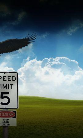 4235 baixar papel de parede Animais, Aves, Eagles - protetores de tela e imagens gratuitamente