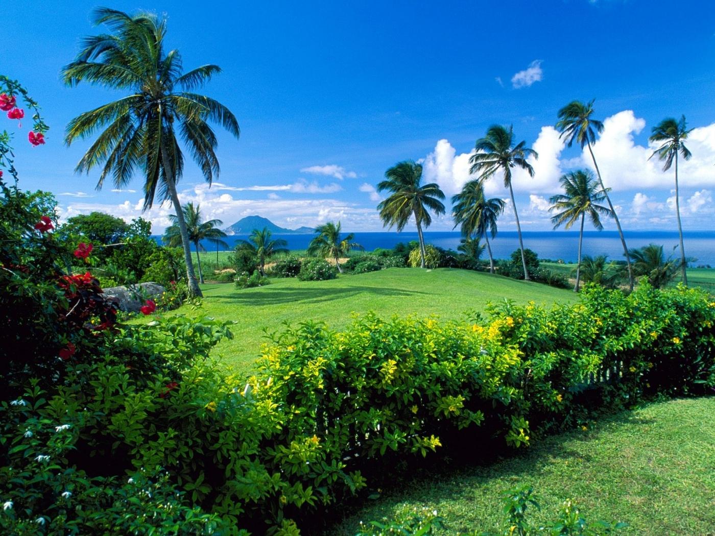 26499 免費下載壁紙 景观, 海, 棕榈 屏保和圖片