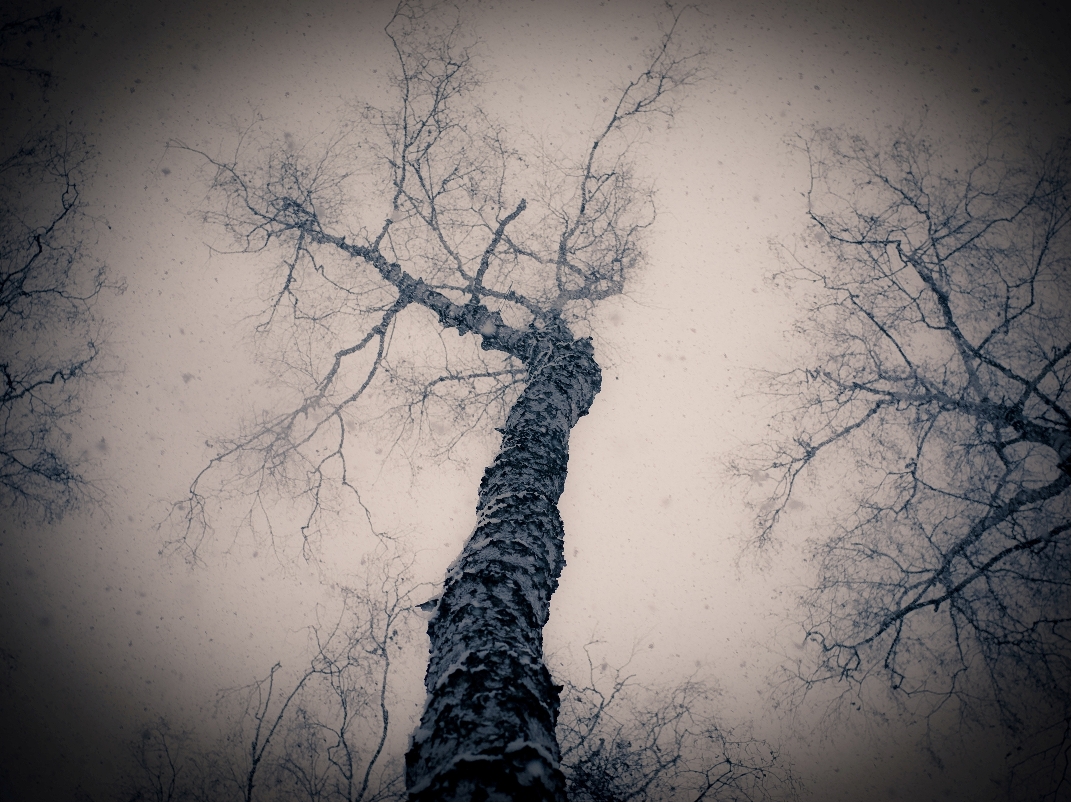 124299 download wallpaper Nature, Wood, Tree, Gloomy, From Below, Branches, Branch screensavers and pictures for free