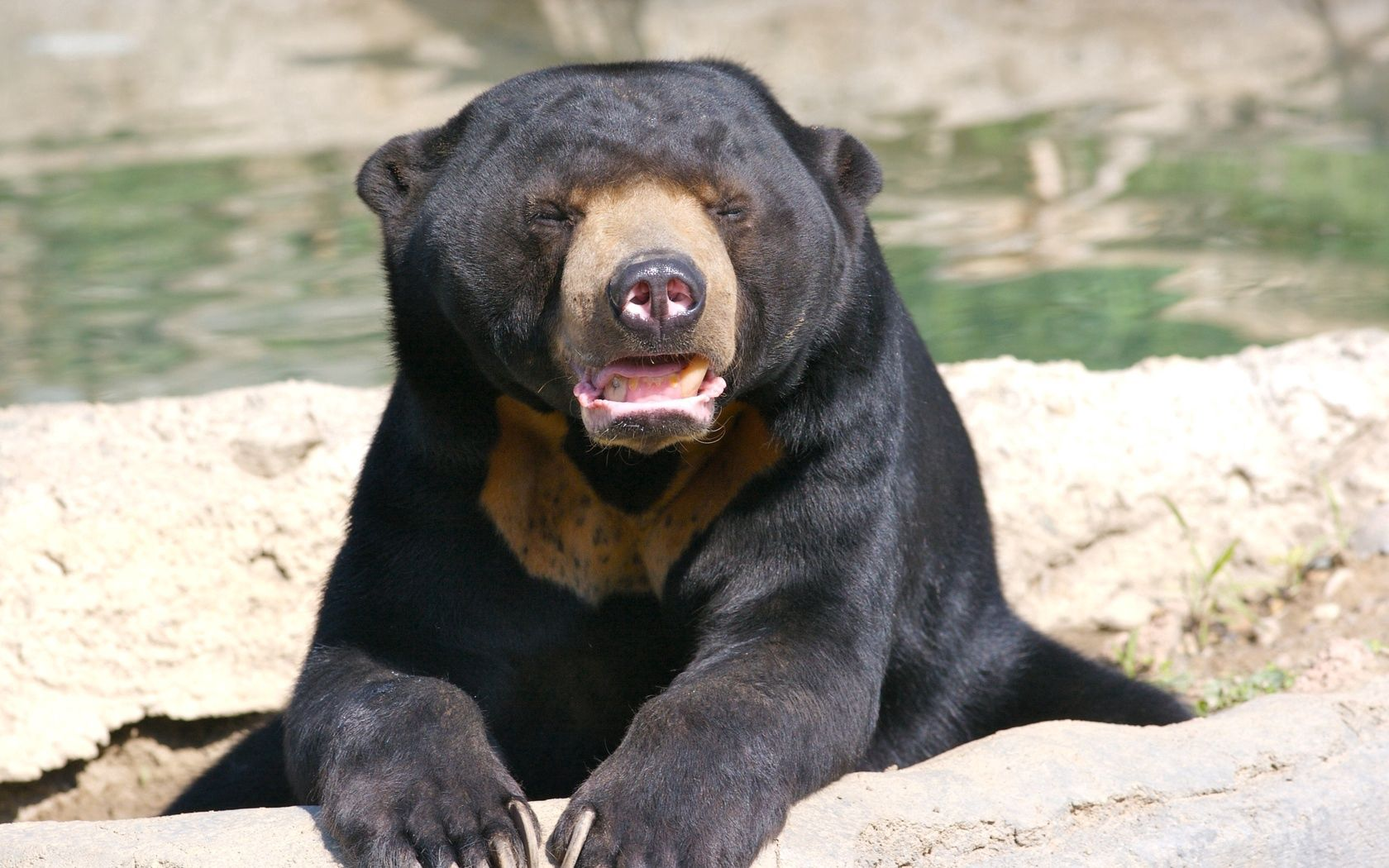 147837 Screensavers and Wallpapers Nose for phone. Download Animals, Muzzle, Bear, Breed, Nose pictures for free