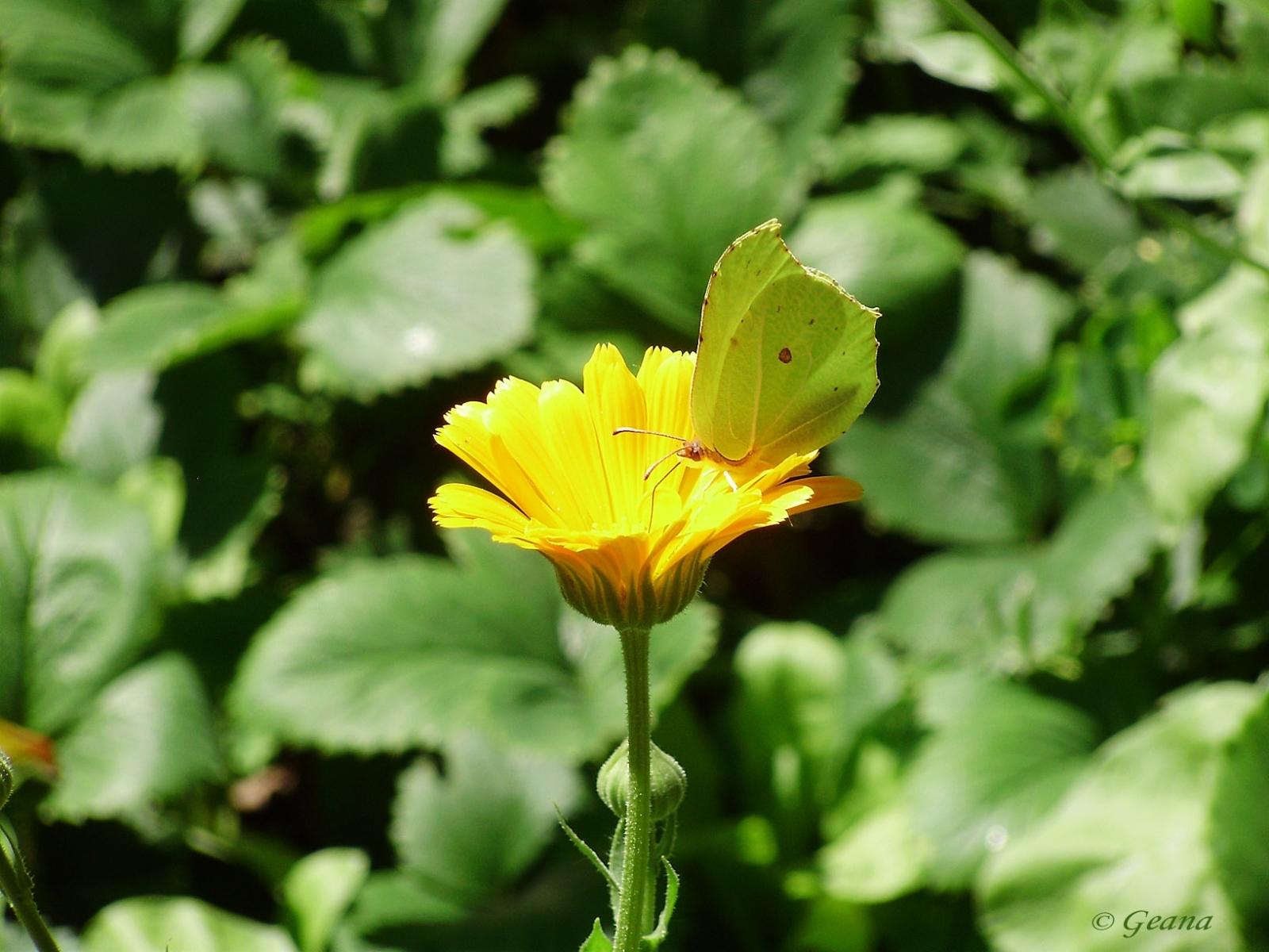 6371 скачать обои Растения, Цветы - заставки и картинки бесплатно