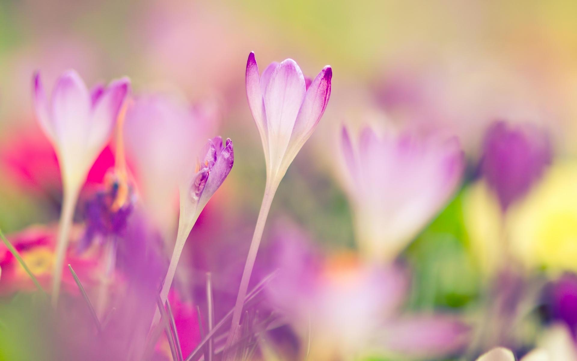 45786 скачать обои Растения, Цветы - заставки и картинки бесплатно