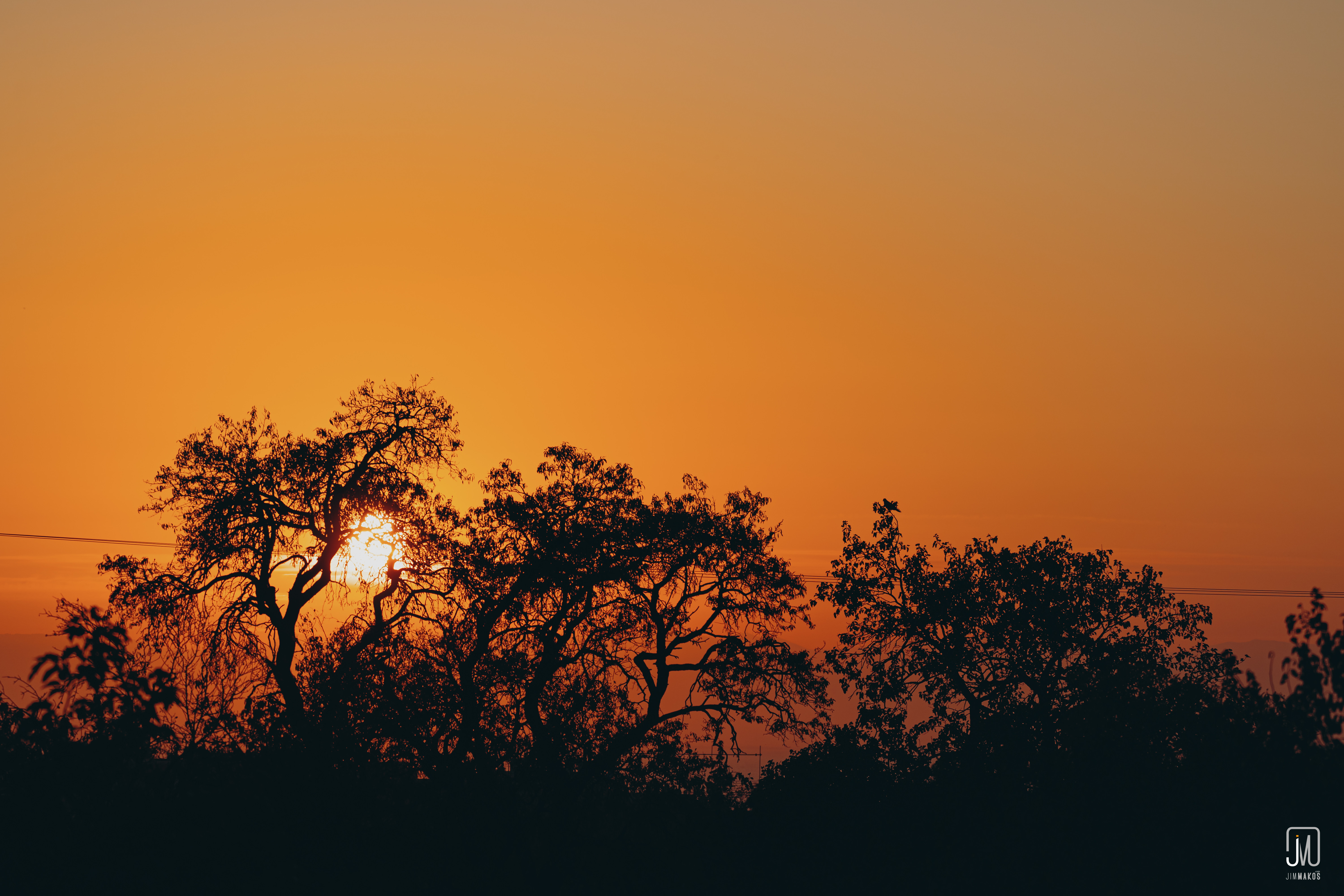 135852 download wallpaper Nature, Sunset, Branches, Dark, Sun screensavers and pictures for free