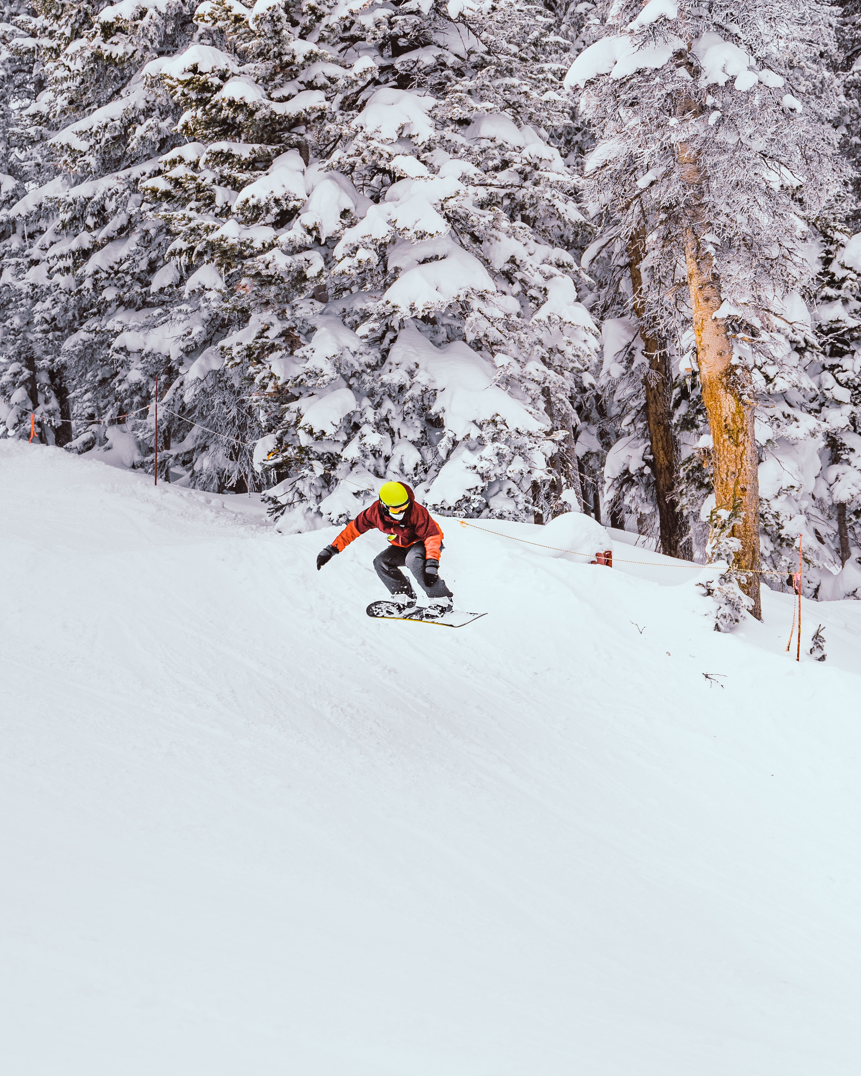 156418 download wallpaper Sports, Snowboard, Snowboarder, Bounce, Jump, Snow, Trees, Winter screensavers and pictures for free