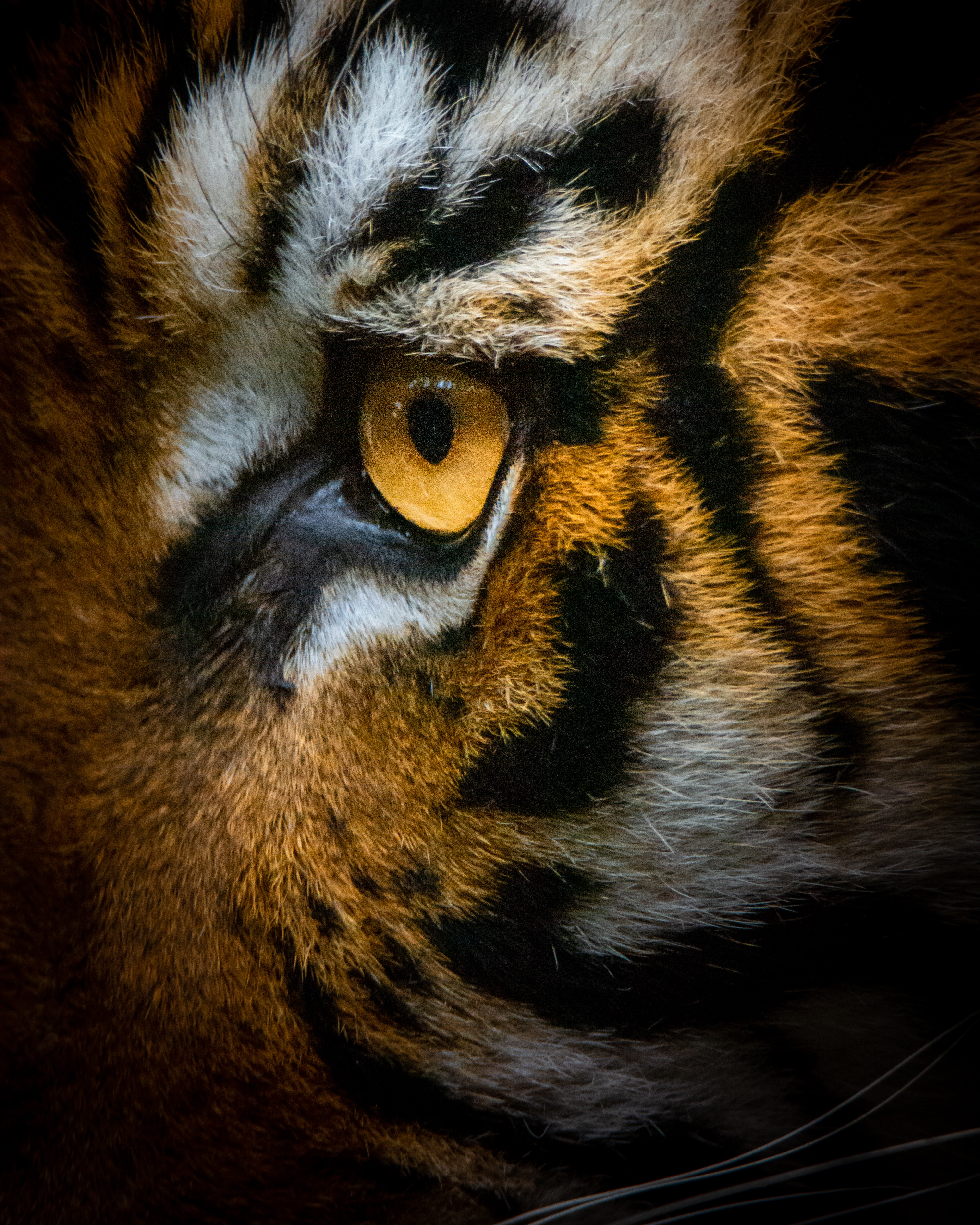 84636 download wallpaper Animals, Tiger, Eye, Macro screensavers and pictures for free