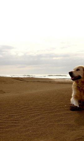 41516 baixar papel de parede Animais, Paisagem, Cães, Praia - protetores de tela e imagens gratuitamente