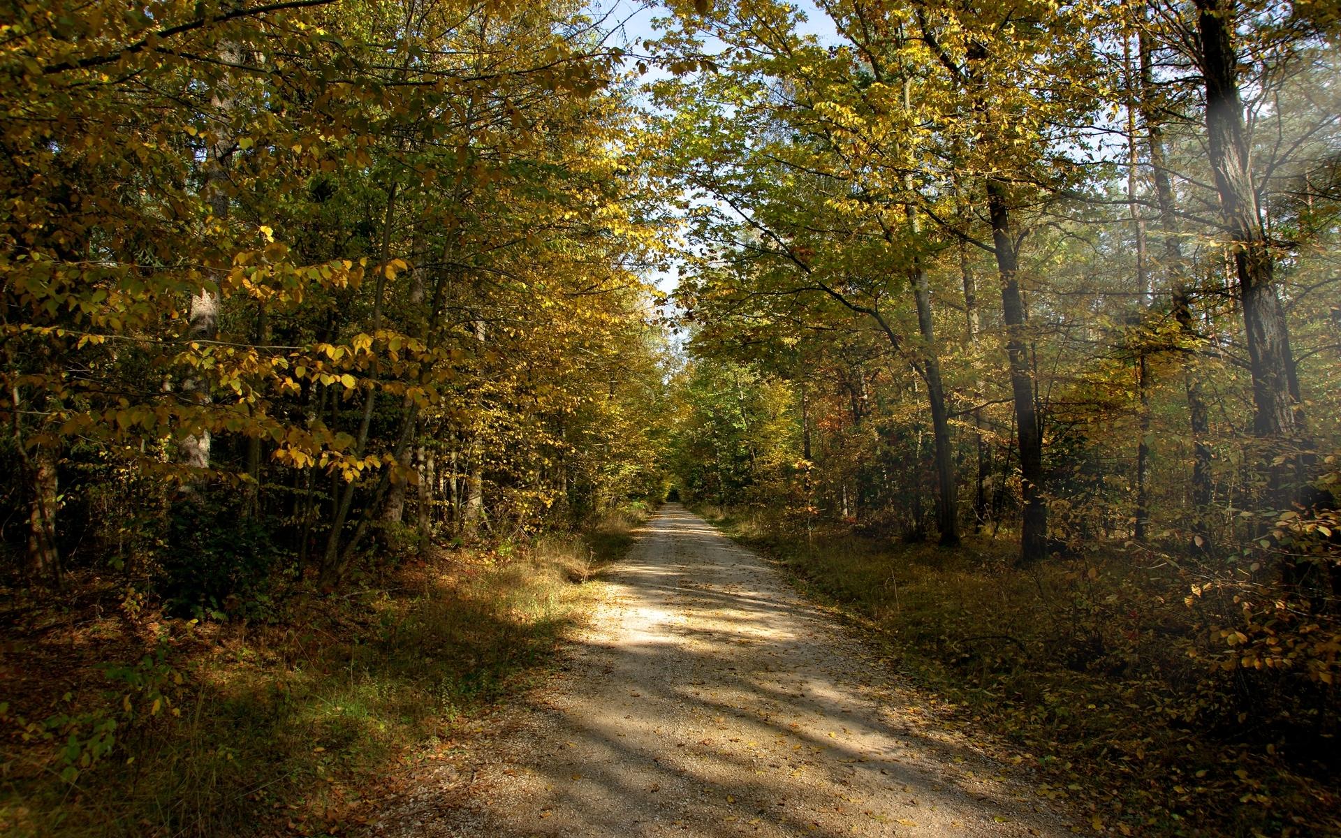 24139 скачать обои Пейзаж, Деревья, Дороги - заставки и картинки бесплатно
