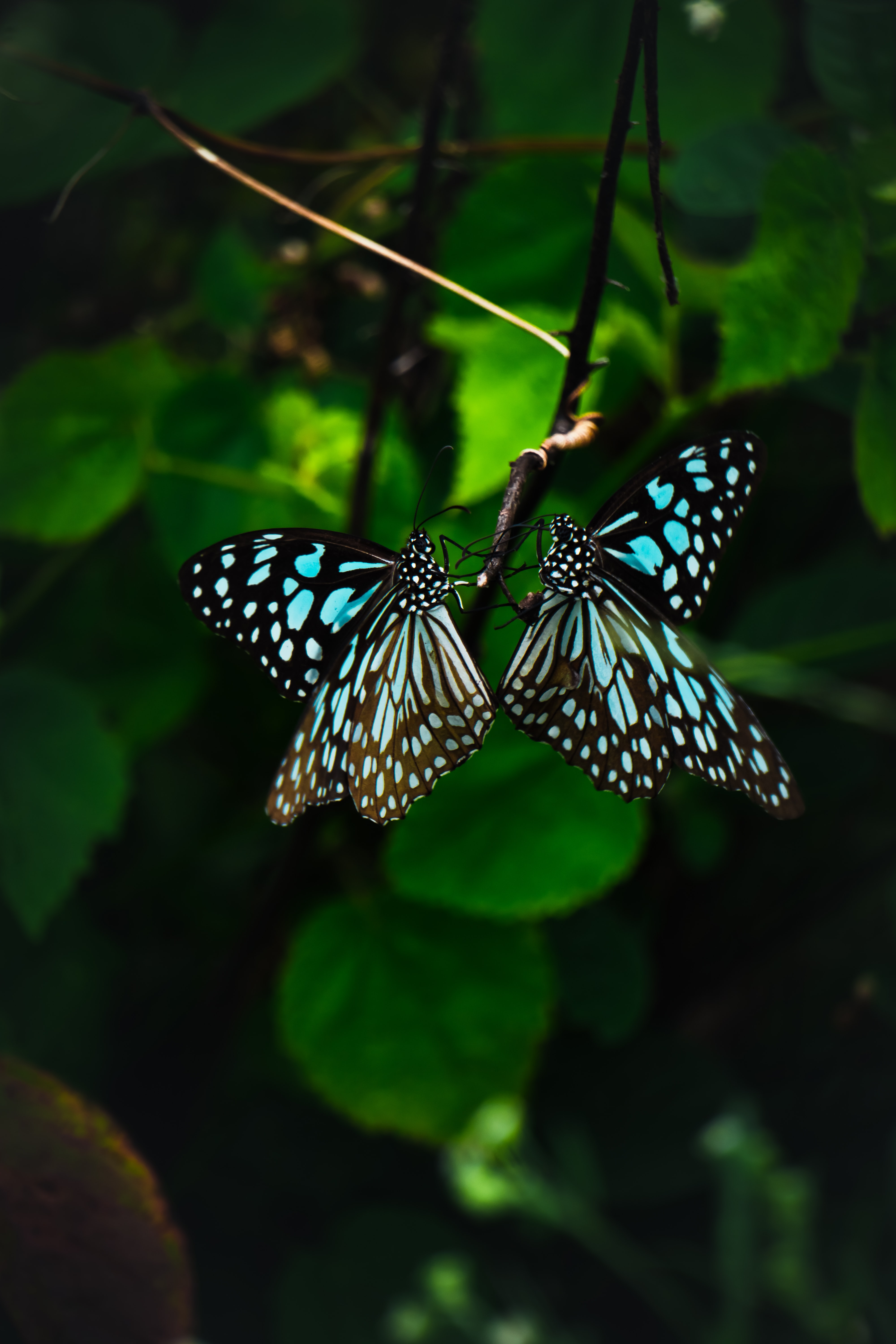 77364 download wallpaper Butterflies, Animals, Pattern, Wings, Tropical screensavers and pictures for free