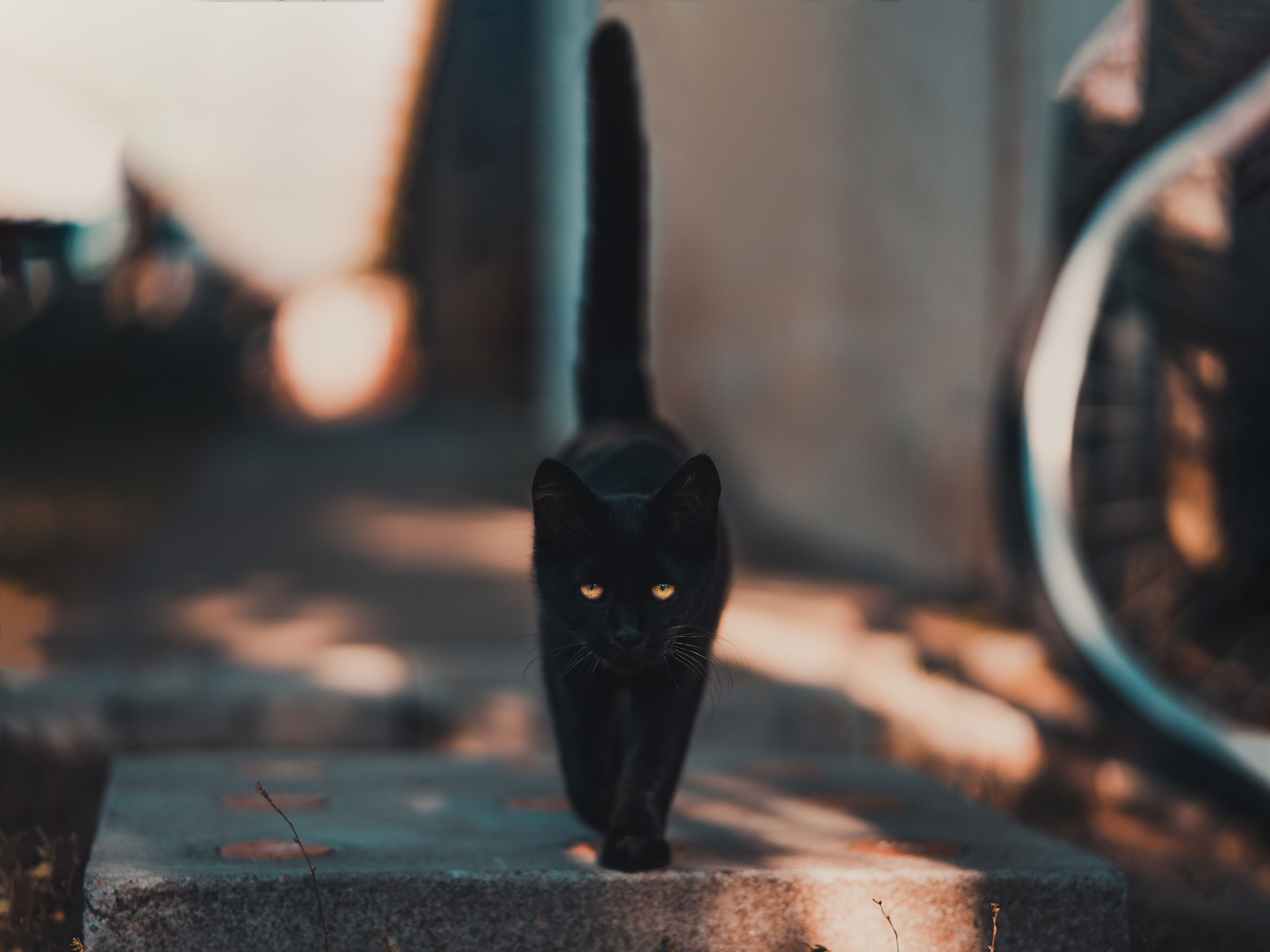 Best Kitty wallpapers for phone screen