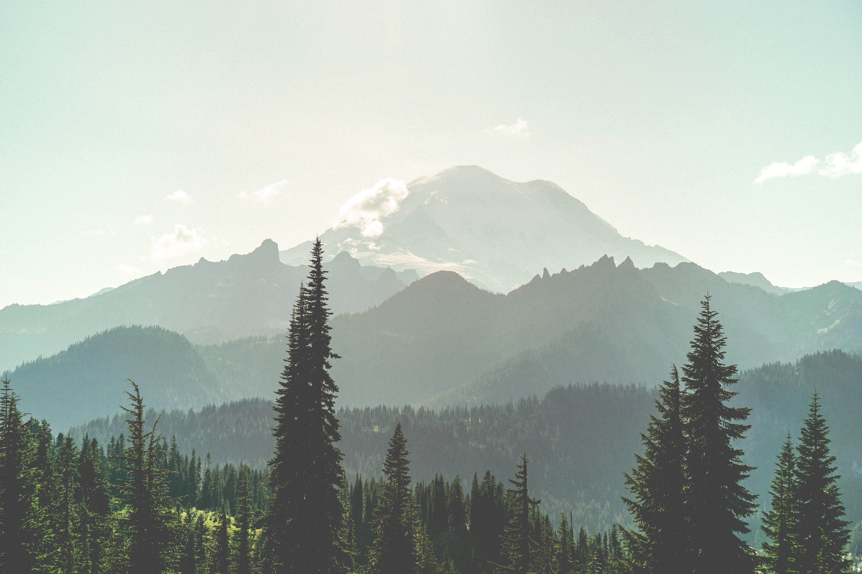 157971壁紙のダウンロード森林, 森, 霧, 自然, 山脈, 風景-スクリーンセーバーと写真を無料で