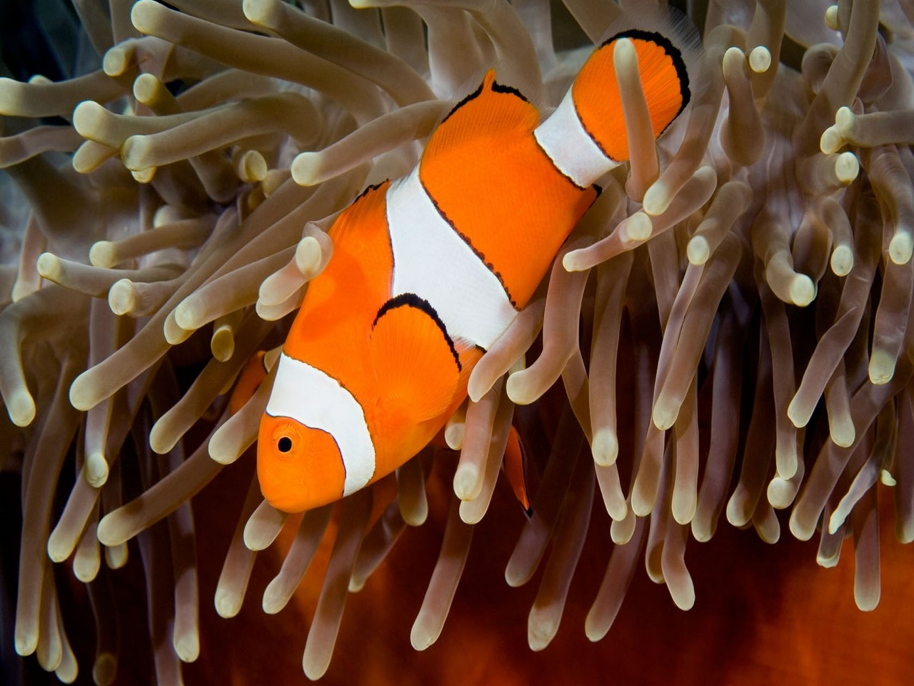 36647 download wallpaper Animals, Fishes screensavers and pictures for free