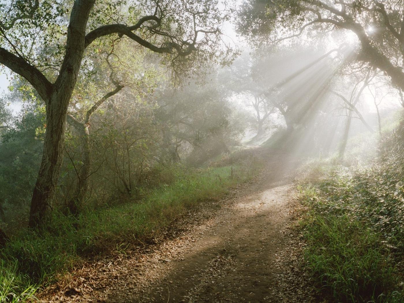 Handy-Wallpaper Landschaft, Bäume, Roads kostenlos herunterladen.