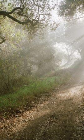 39797 скачать обои Пейзаж, Деревья, Дороги - заставки и картинки бесплатно