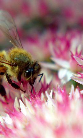 30343 Salvapantallas y fondos de pantalla Insectos en tu teléfono. Descarga imágenes de Insectos, Abejas gratis