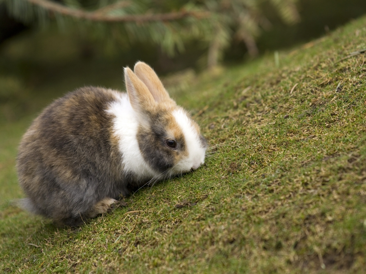 29153 download wallpaper Animals, Rabbits screensavers and pictures for free