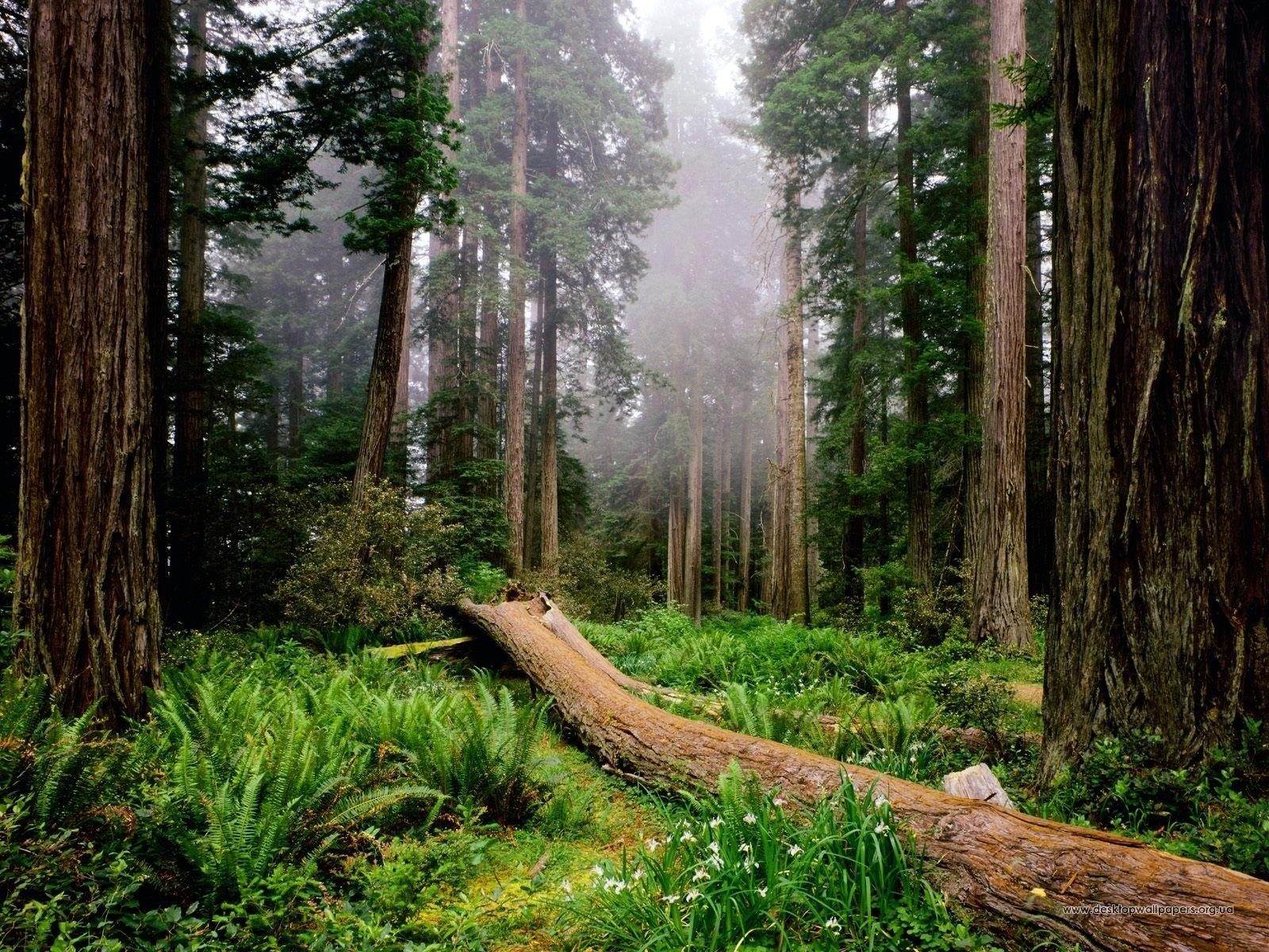 4587 скачать обои Пейзаж, Деревья - заставки и картинки бесплатно