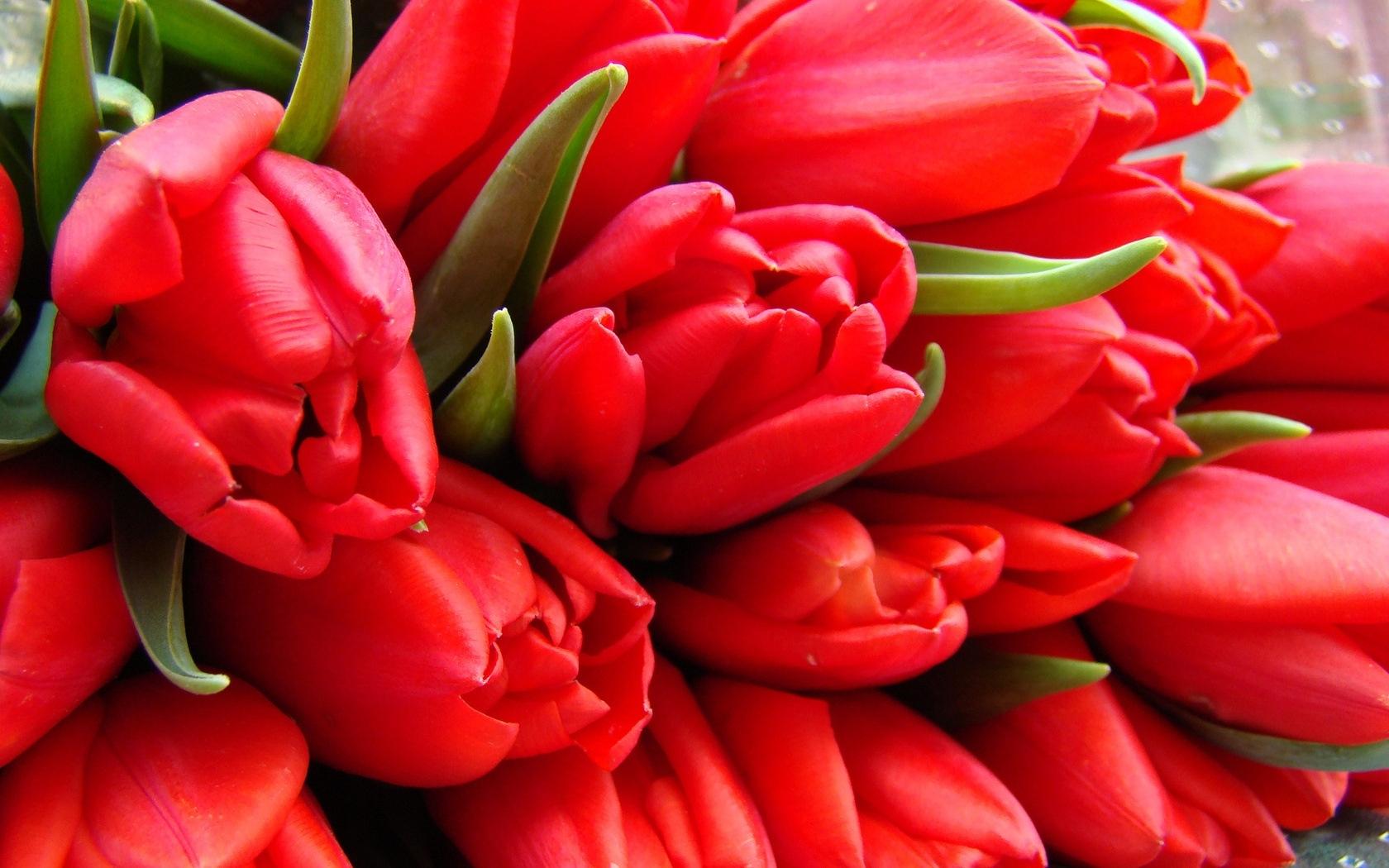 45747 скачать обои Рисунки, Цветы, Тюльпаны - заставки и картинки бесплатно