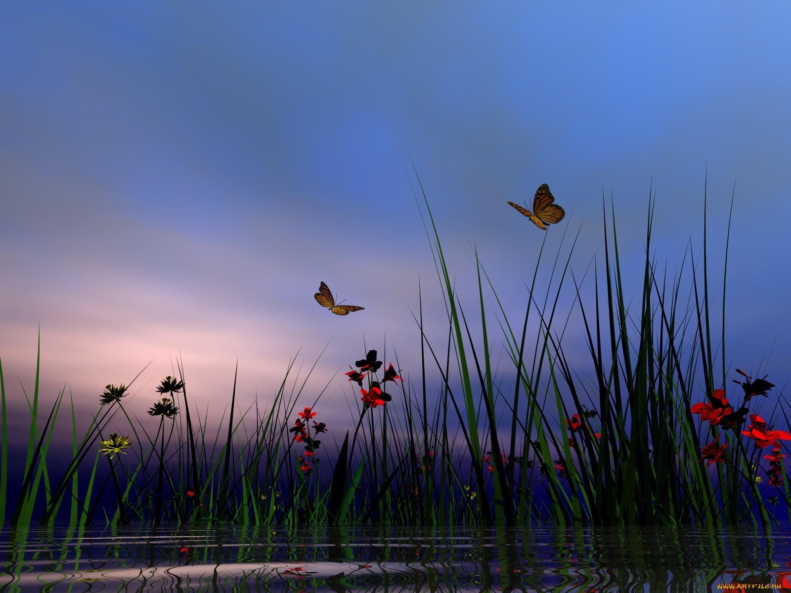 20022 Hintergrundbild herunterladen Pflanzen, Insekten, Schmetterlinge, Blumen, Grass - Bildschirmschoner und Bilder kostenlos