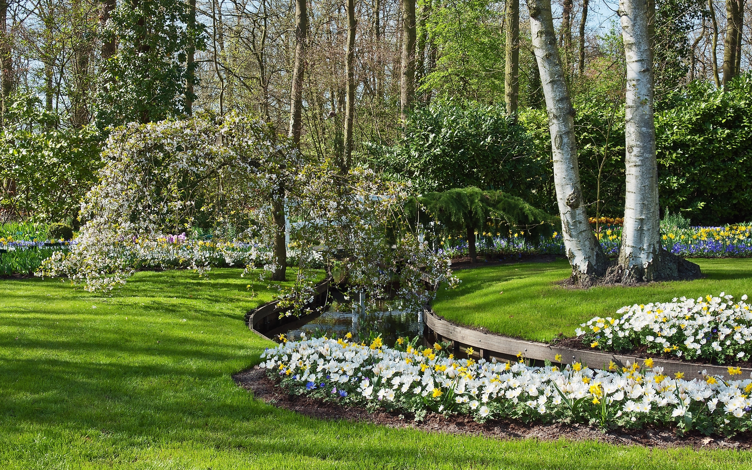 23395 descargar fondo de pantalla Paisaje, Flores, Árboles, Hierba, Arbusto: protectores de pantalla e imágenes gratis