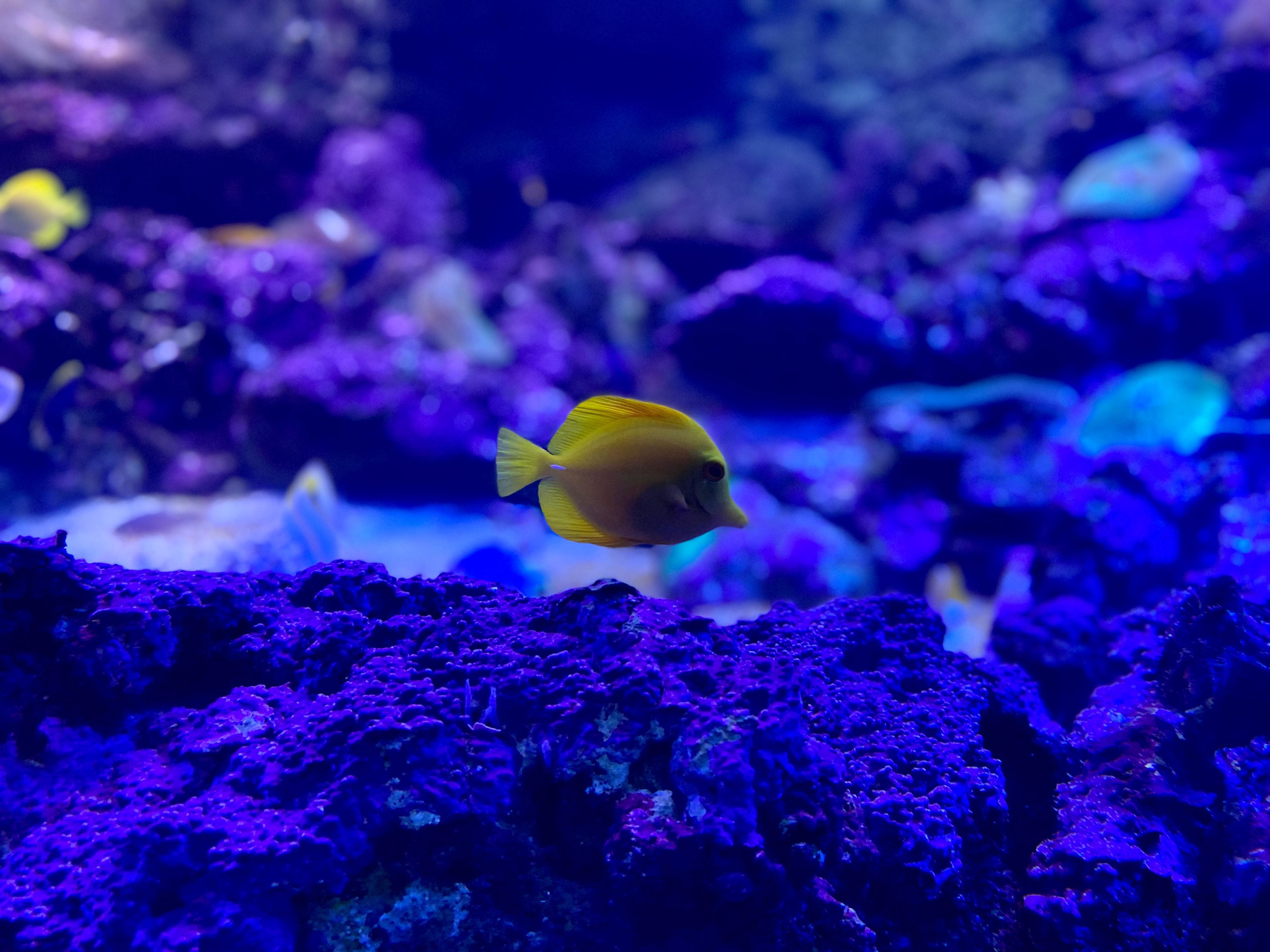 89646 Screensavers and Wallpapers Aquarium for phone. Download Animals, Coral, Aquarium, Fish, Zebrasoma pictures for free