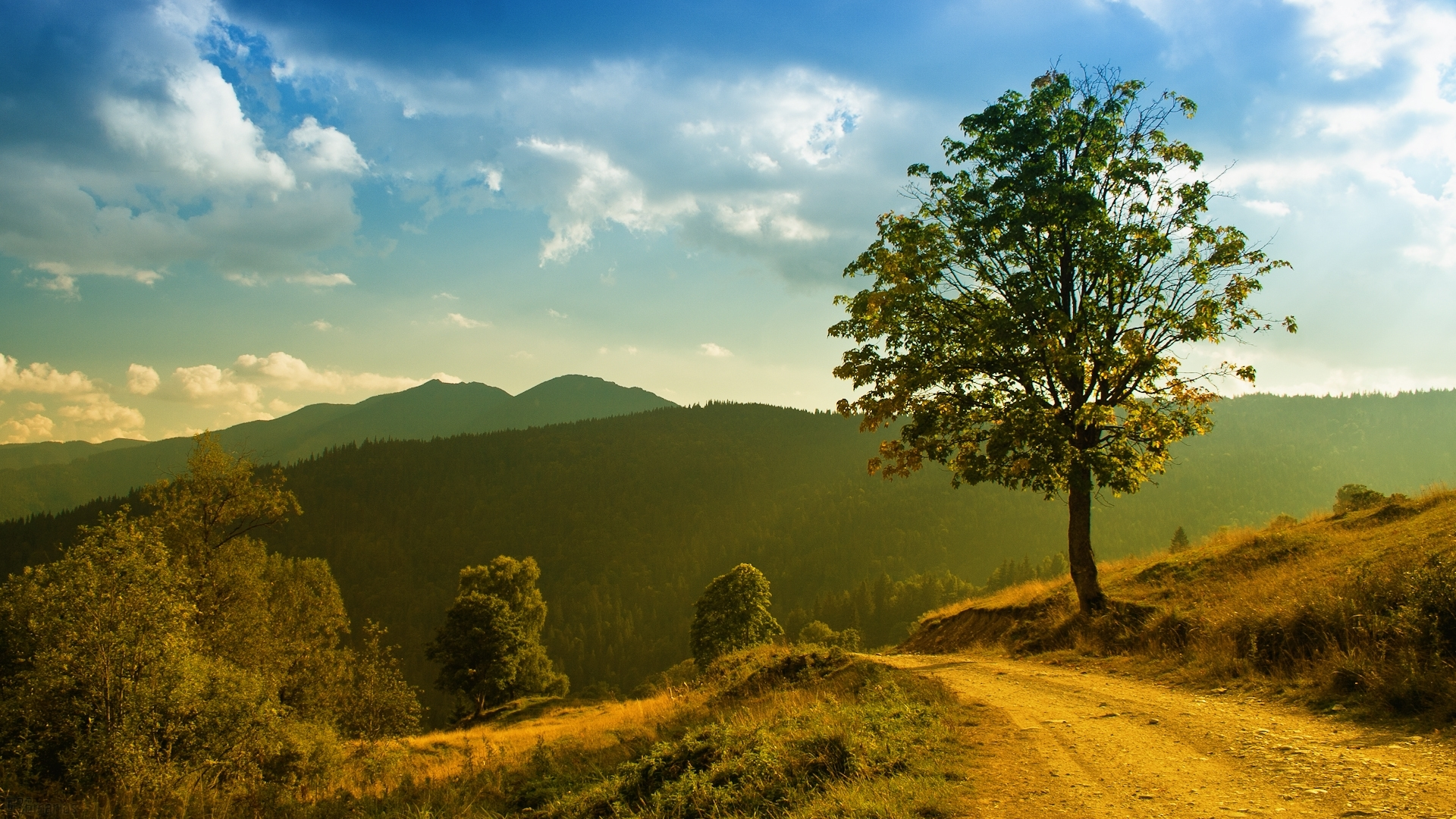 38321 скачать обои Пейзаж, Деревья, Дороги - заставки и картинки бесплатно