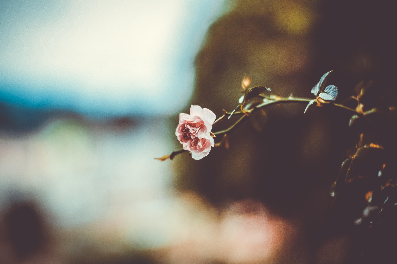 137042 скачать обои Размытость, Цветы, Цветок, Ветка - заставки и картинки бесплатно