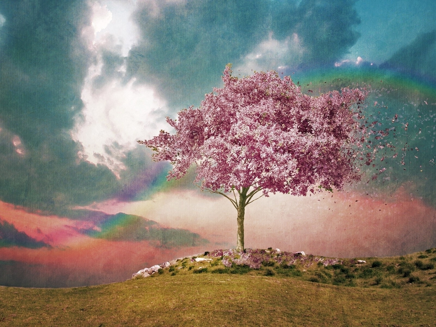 49954 download wallpaper Landscape, Nature, Trees, Pictures screensavers and pictures for free