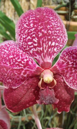 10424 скачать обои Растения, Цветы - заставки и картинки бесплатно