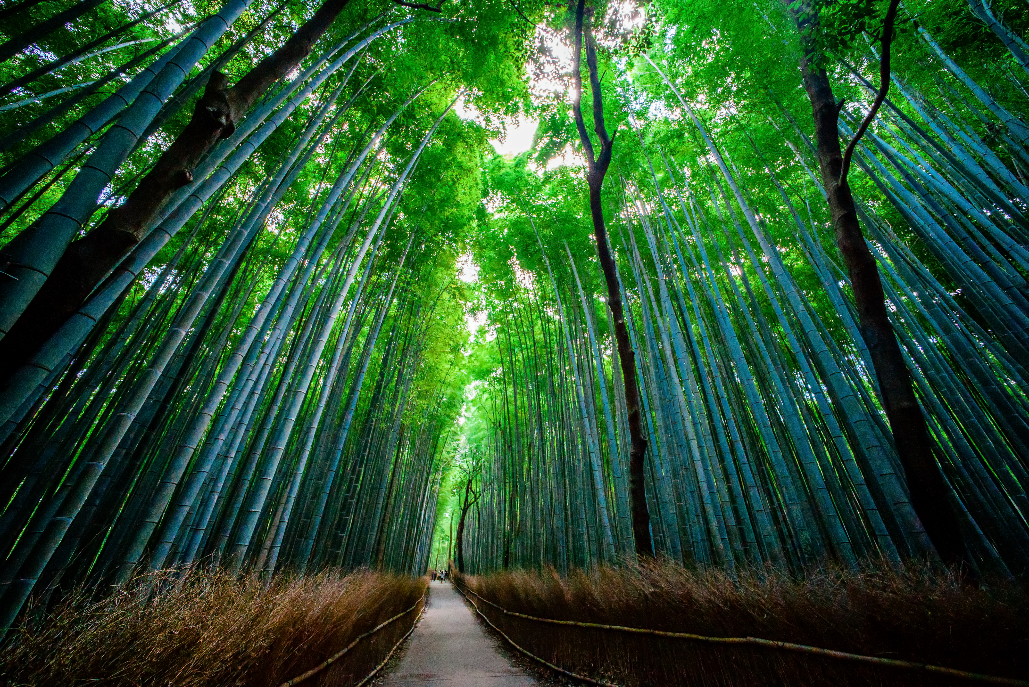 129449 download wallpaper Nature, Bamboo, Forest, Trees, Bottom View screensavers and pictures for free