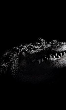 5867 baixar papel de parede Animais, Crocodiles - protetores de tela e imagens gratuitamente