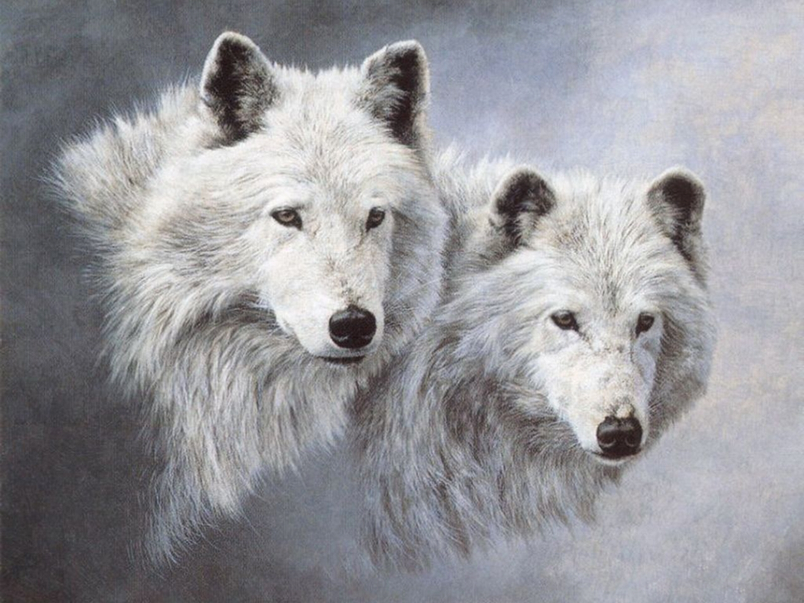 7749 download wallpaper Animals, Wolfs screensavers and pictures for free