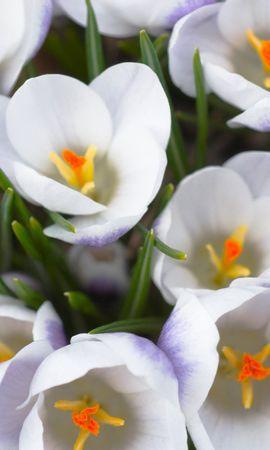 46880 baixar papel de parede Plantas, Flores - protetores de tela e imagens gratuitamente