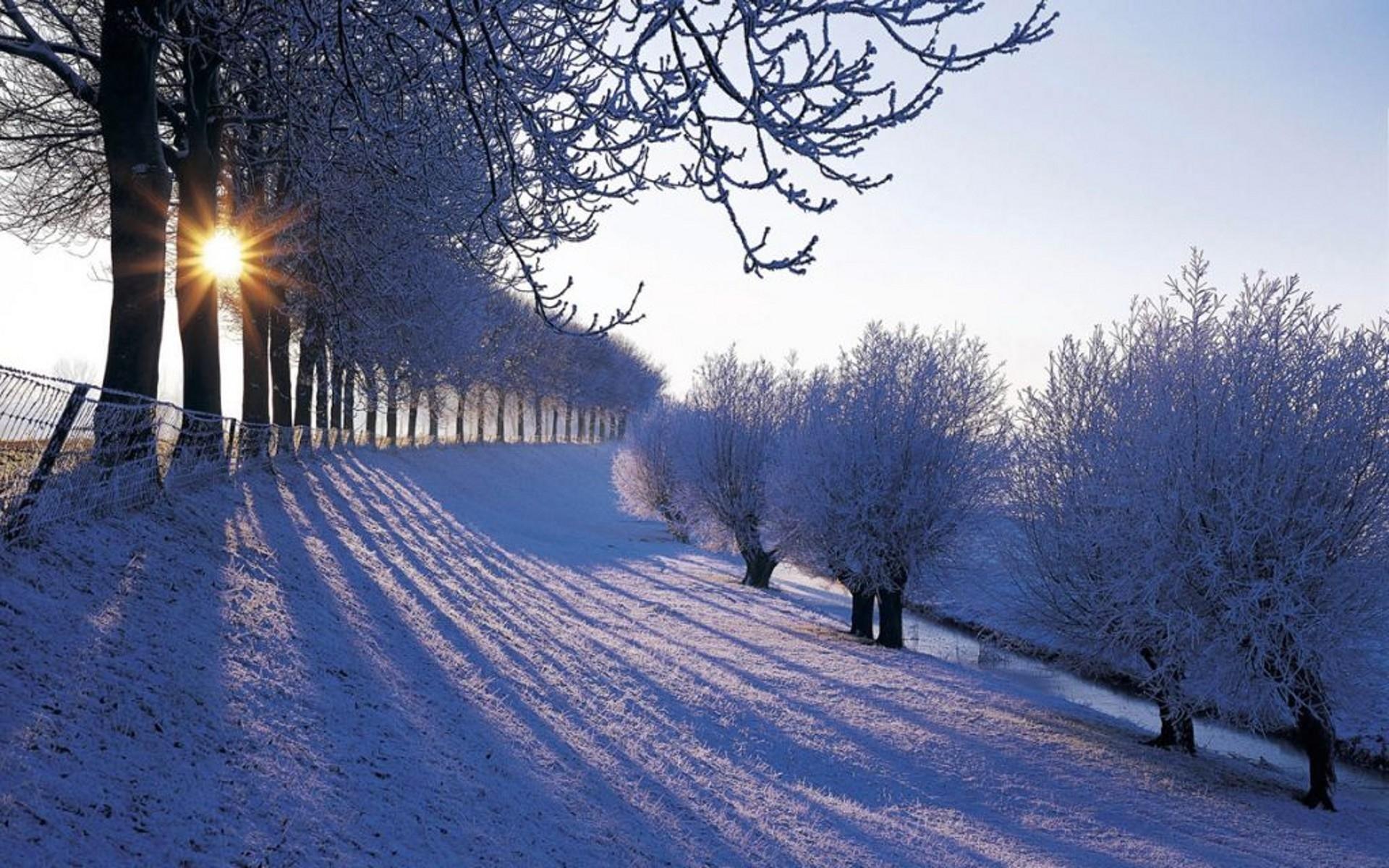 25078 скачать обои Пейзаж, Зима, Деревья, Солнце, Снег - заставки и картинки бесплатно